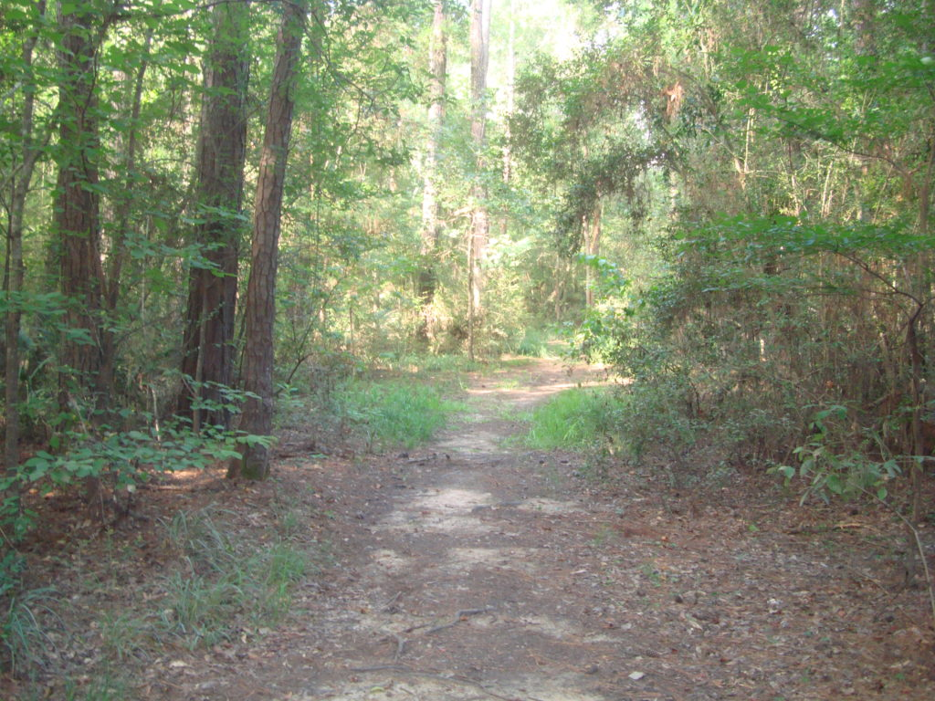 The Main Trail