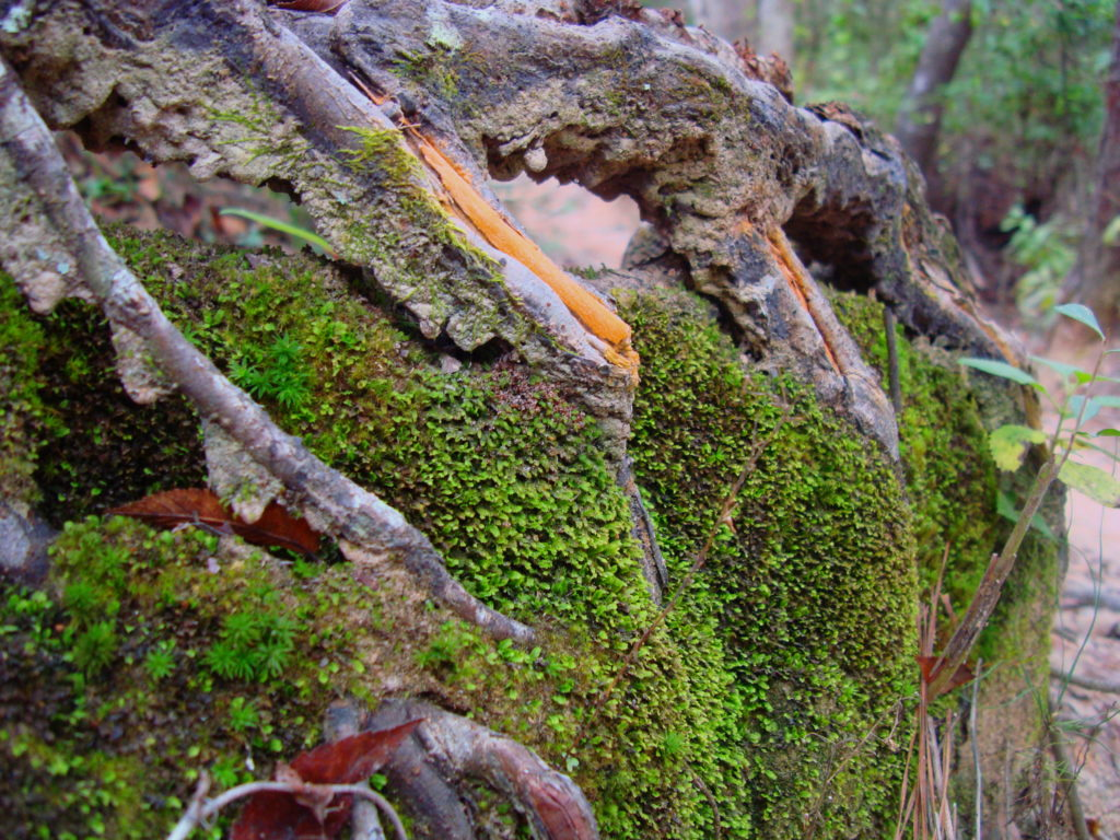 Mossy Roots.