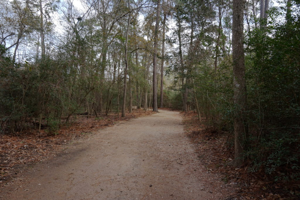 Palmetto Trail Path